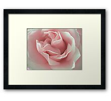 Pink Beauty. Framed Print
