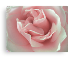 Pink Beauty. Canvas Print