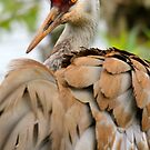 Sandhill Crane by RichImage