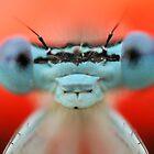 Blue Eyes by VladimirFloyd