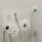 White Poppy by VladimirFloyd