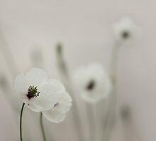 White Poppy by VladimirFloyd