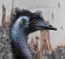 I know, Bad Hair Day! by bazcelt