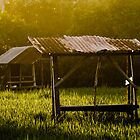 rice field rays by wellman