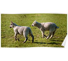 Leaping Spring Lambs Poster