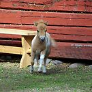 Miniature horse foal #1 by MarianaEwa
