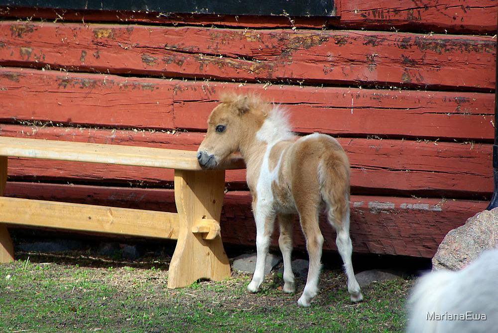 Miniature horse foal #2 by MarianaEwa