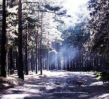 Forest. by Anna Shishkovskaya