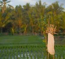 Ubud Offering  by wellman