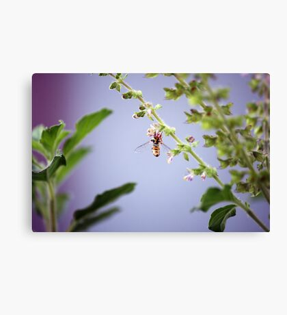 A pollinator at work Canvas Print