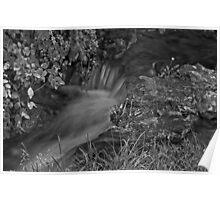 Ozarks stream in Black & White Poster