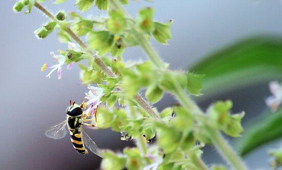 Nature's merry minion by rickvohra