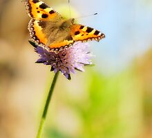 Butterfly by igorsin