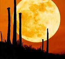 Moon Rise Over Desert by Lynn Geoffroy