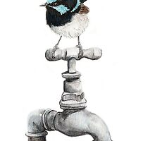 Superb Blue Wren Perched on Garden Tap by Meaghan Roberts