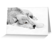 Wolf Laying in Snow Greeting Card