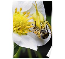 Yellow spider Poster