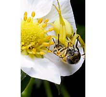 Yellow spider Photographic Print