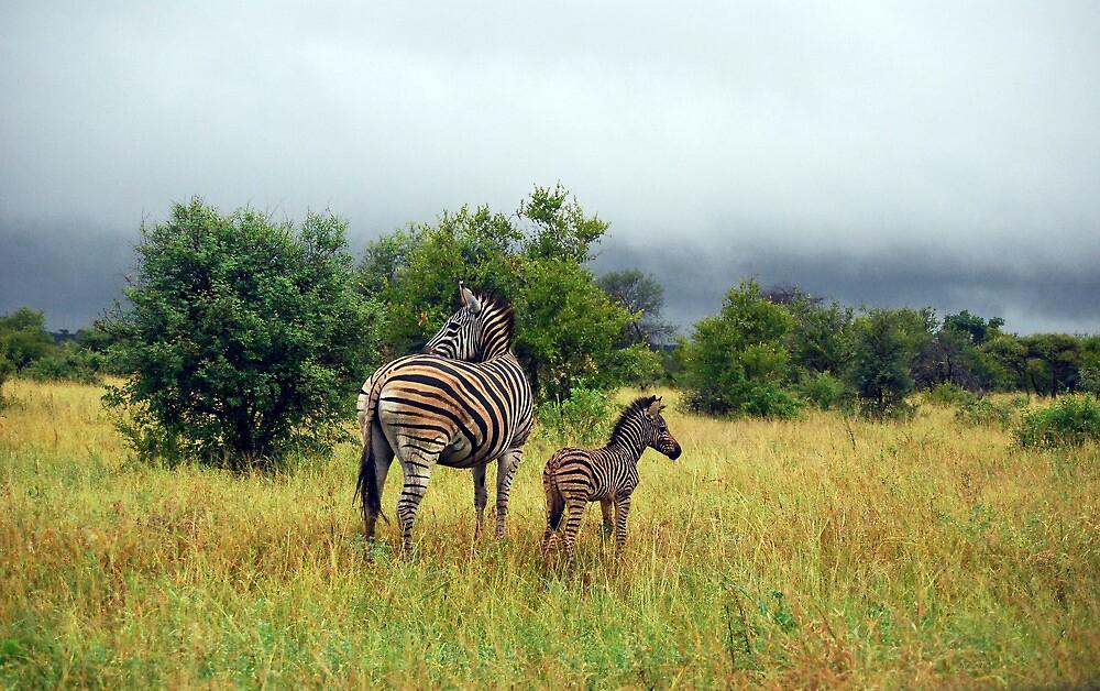 Zebra with Foal by KAREN SCHMIDT