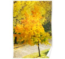 Autumn colorful maple Poster