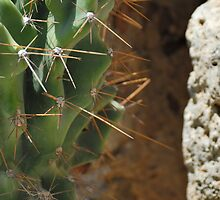 Cactus and stone by igorsin