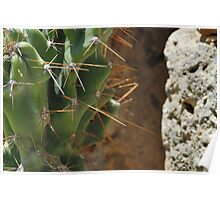 Cactus and stone Poster