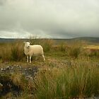 What Are You Lookin At? Slievenakilla, Ireland by kdilts