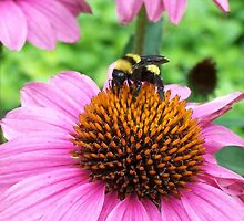 Bumble bee by Ann Nelson