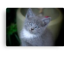 Baby Kittens Face Canvas Print