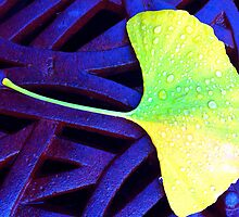 Ginko Leaf  by Ethna Gillespie