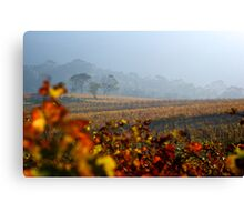 Autumn Vineyard haze Cape Town Canvas Print