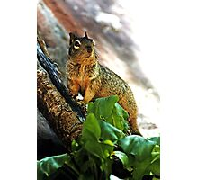 Haughty  (Bryant's fox squirrel) Photographic Print