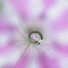 Clematis in a drop by Yool