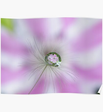Clematis in a drop Poster