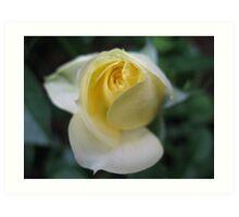 Lemon Ice Rose Art Print