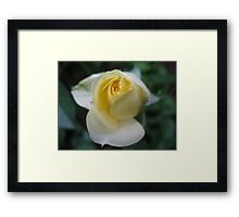 Lemon Ice Rose Framed Print
