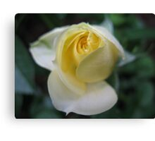 Lemon Ice Rose Canvas Print