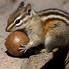 It's My Ball! #2 by Betsy  Seeton