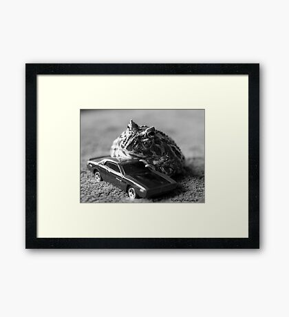 Fast and the  Frogious Framed Print