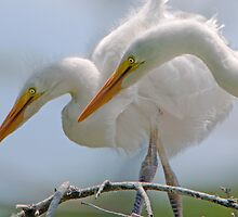 Egret Chicks in Profile by Bonnie T.  Barry