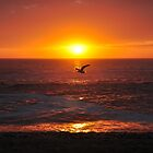 Seagull Sunset by Cheryl Westerdale