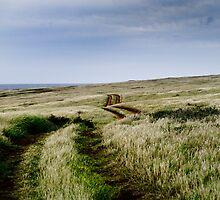 Quiet Road by parapet