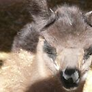 Baby Llama by MaeBelle