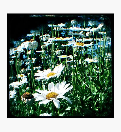 Field of flowers TTV Photographic Print