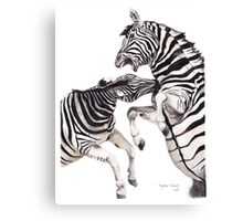 Zebra Fight Canvas Print
