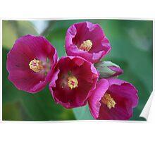 Purple flower 1747 Poster