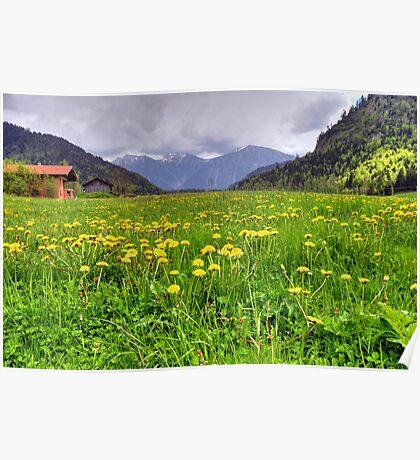 german meadow Poster