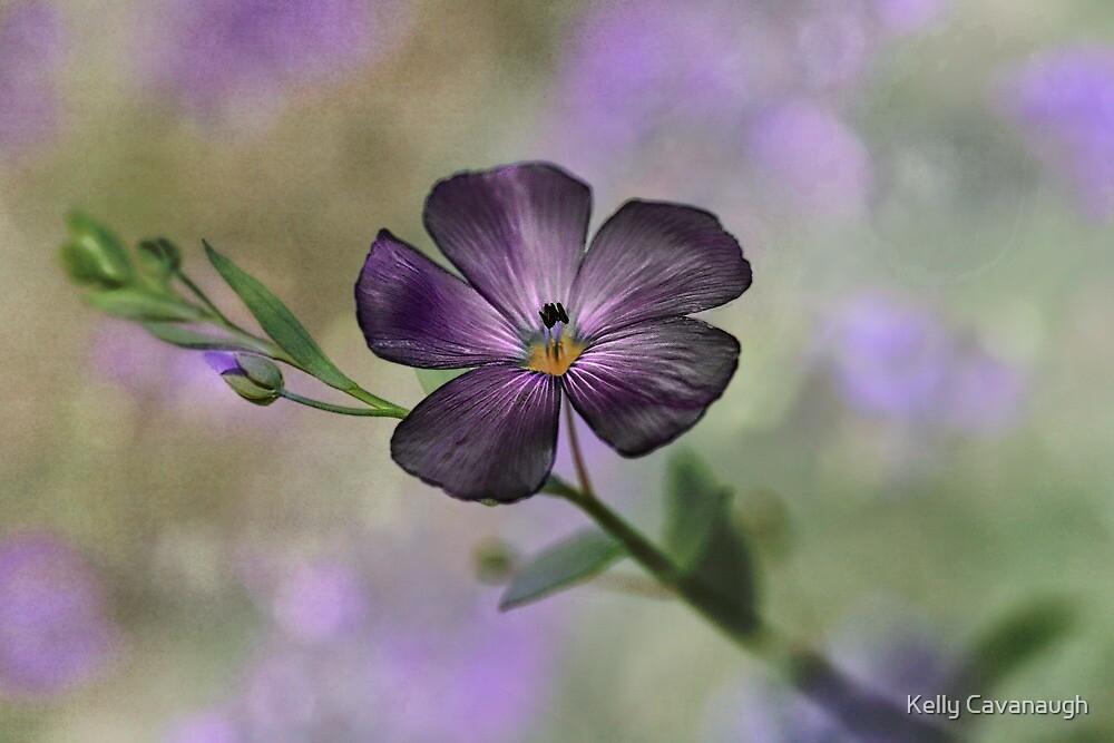Purple Petals by Kelly Cavanaugh