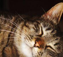 Soft Kitty, Warm Kitty Sticker