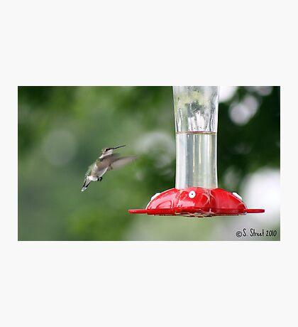 Precious Little Flying Jewel. Photographic Print